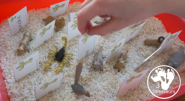 Free Wild West Sorting Nouns & Verbs - with Ghost Town at Sundown - pulling the noun and verb cards from the sensory bin - 3Dinosaurs.com