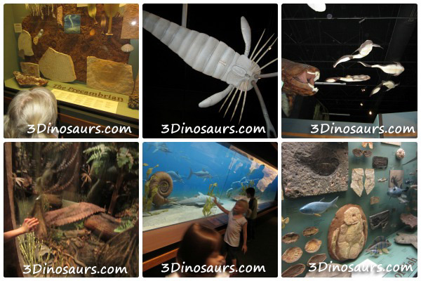 Thanksgiving Point: Museum of Ancient Life