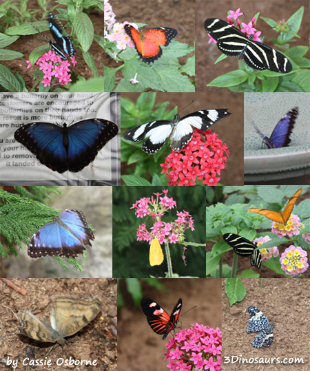 The Butterfly Place Review