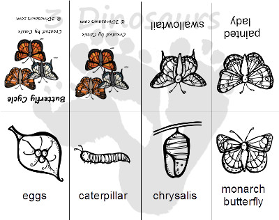 Bug Pack: Life Cycle of a Butterfly Early Reader Printable