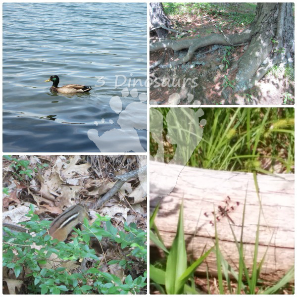 Exploring Nature at Walden Pond - Free Nature Journal- 3Dinosaurs.com