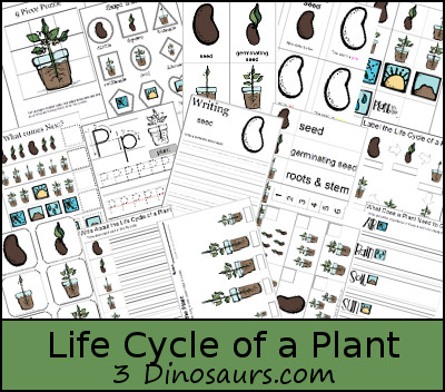 Free Life Cycle of a Plant - 3Dinosaurs.com
