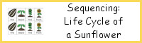 Sequencing: Sunflower Life Cycle